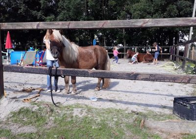 BinnenInn spelen met de paarden